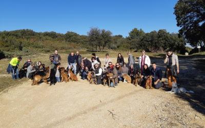Vaccin contre la parvovirose et la toux du chenil :  obligatoire pour tous les chiens !