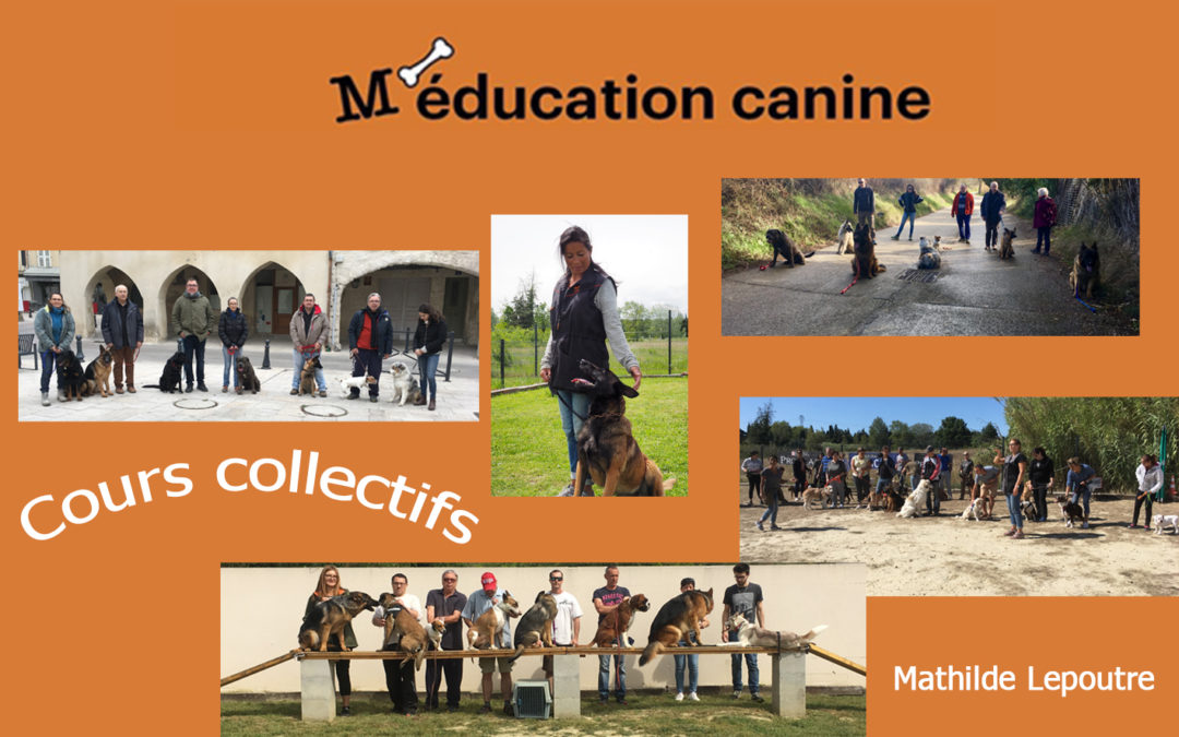 Cours collectifs et cours individuels : Mai 2020
